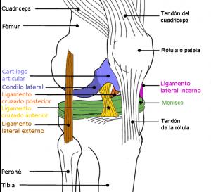 #rodilla wikimedia.org